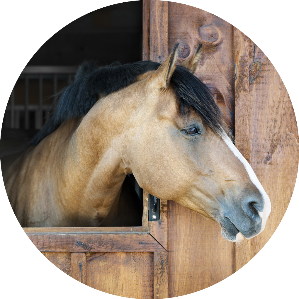 Contact Care for horses
